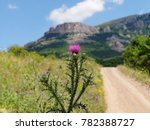 Small photo of thistle flower having magical power according to the legends, blossomed on the mountain road, selective focus