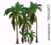 alexander king palm trees 3d... | Shutterstock . vector #782412877