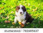 a bearded collie puppy running... | Shutterstock . vector #782685637