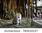 balinese long tailed monkey  in ... | Shutterstock . vector #783010237