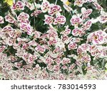 purple and white orchid... | Shutterstock . vector #783014593