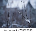 tree covered with snow | Shutterstock . vector #783025933