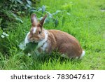 Stock photo rabbit sitting on meadow and eating leaf close up bunny eating rabbit on the green background red 783047617