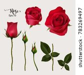 realistic of red roses 5 styles ... | Shutterstock .eps vector #783269497