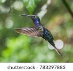 hummingbird monteverde cloud... | Shutterstock . vector #783297883