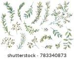 botanical illustrations. floral ... | Shutterstock . vector #783340873