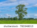 tall beech tree in summer  in a ... | Shutterstock . vector #783348013
