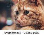 domestic ginger cat at home | Shutterstock . vector #783511003