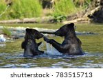 grizzly bears in the bella... | Shutterstock . vector #783515713