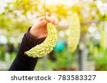 hand holding bitter gourd with ... | Shutterstock . vector #783583327