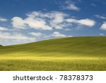 Cereal field on a sunny day - stock photo
