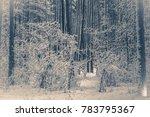 old vintage photo. tree pine... | Shutterstock . vector #783795367