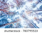 tree pine spruce in magic... | Shutterstock . vector #783795523
