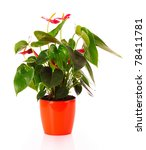 Anthurium With Red Flowers In...