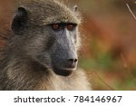 baboon sitting next to the road ... | Shutterstock . vector #784146967
