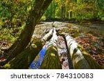 cabin john park  bethesda ... | Shutterstock . vector #784310083