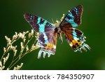 butterfly   madagascan sunset... | Shutterstock . vector #784350907