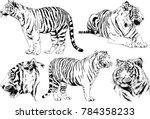 vector drawings sketches... | Shutterstock .eps vector #784358233