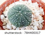 Small photo of Cactus Plants Cactus are very popular plants because of their adaptation qualities and appearance. They are adapted to grow in hot and tropical climates and desert areas.