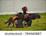 cock fighting game | Shutterstock . vector #784460887