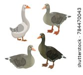 Set Of Vector Greylag Geese....