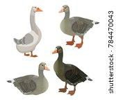 Set Of Vector Greylag Geese....