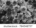 a black and white shot of a...   Shutterstock . vector #784548757
