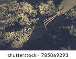 gardening  weeding weeds....   Shutterstock . vector #785069293