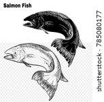 salmon art highly detailed in... | Shutterstock .eps vector #785080177