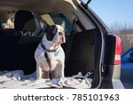 french bulldog traveling in the ... | Shutterstock . vector #785101963
