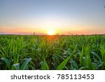 a front selective focus picture ... | Shutterstock . vector #785113453