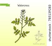 watercress  nasturtium...   Shutterstock .eps vector #785139283