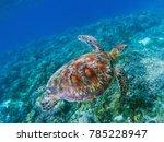 sea turtle in tropical seashore ... | Shutterstock . vector #785228947