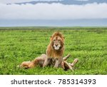 two big lions in the savannah.... | Shutterstock . vector #785314393