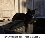 urban stray cats | Shutterstock . vector #785336857