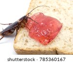 close up cockroach on the whole ... | Shutterstock . vector #785360167