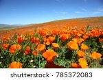 california poppy super bloom | Shutterstock . vector #785372083