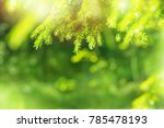 spring bright background with... | Shutterstock . vector #785478193