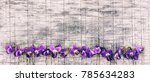 flowers scented violets  on... | Shutterstock . vector #785634283