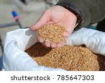 grain in the palm next to a bag ... | Shutterstock . vector #785647303