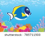 a blue faced surgeon fish...   Shutterstock .eps vector #785711503