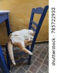 White Cat Sleeping On A Chair ...