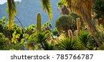 Small photo of Gran Canaria - Green cacti park garden.