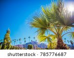 coachella valley vegetation....   Shutterstock . vector #785776687