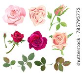 set of roses  pink  red flowers ... | Shutterstock .eps vector #785795773