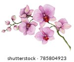 Watercolor Orchid Branch  Hand...