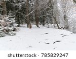 path throug a snowy forest in... | Shutterstock . vector #785829247