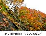 autumn season leaf in naruko... | Shutterstock . vector #786033127