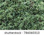 green leaf texture   Shutterstock . vector #786060313