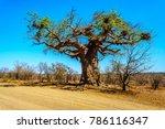 Baobab Tree Under Clear Blue...